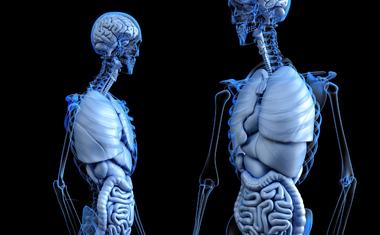 Bélrendszeri problémák kiváltó okai: Stressz és helytelen táplálkozás!