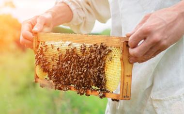 Hogyan lehet karcsúsodni mézzel?