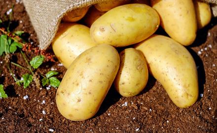 Hagyományos vagy édesburgonya? Diéta burgonyával?